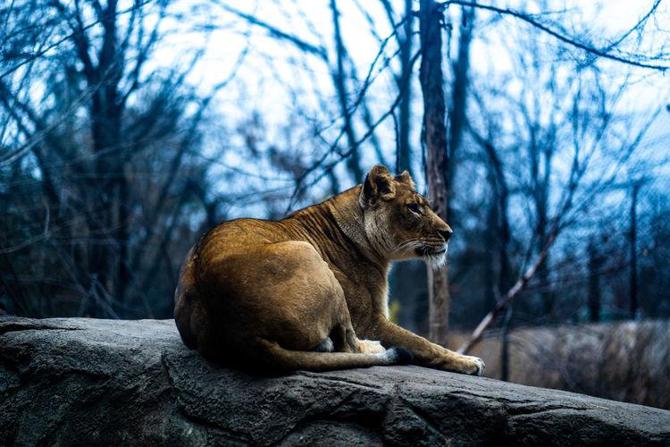Tree Mammal