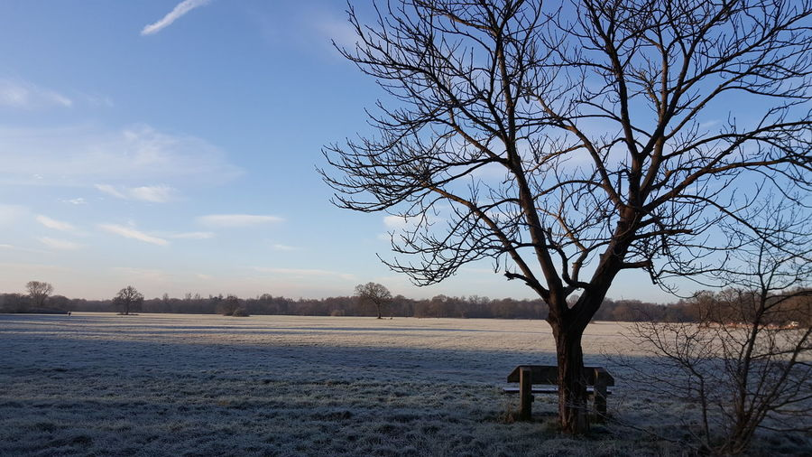 Happy Saturday 💙🙋🙋 Check This Out Wintertime Frosty Mornings Enjoying Life EyeEm Nature Lover Berkshire EyeEm Best Shots Nature Beautiful Maidenhead Eyem Best Shots Nature_collection Streamzoofamily Ladyphotographerofthemonth From My Point Of View The Purist (no Edit, No Filter) Samsung Galaxy S6 Edge+ Bench Tree_collection  Tree And Sky Blue Sky