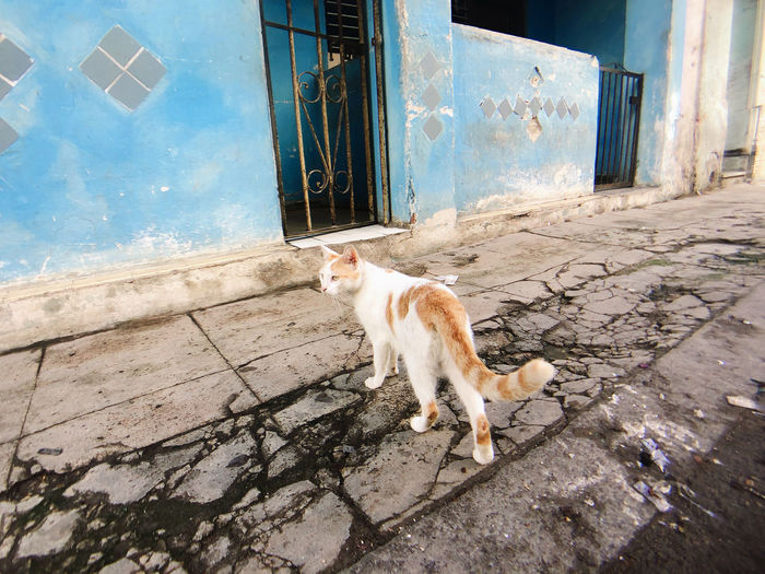 Cat lying on wall of building