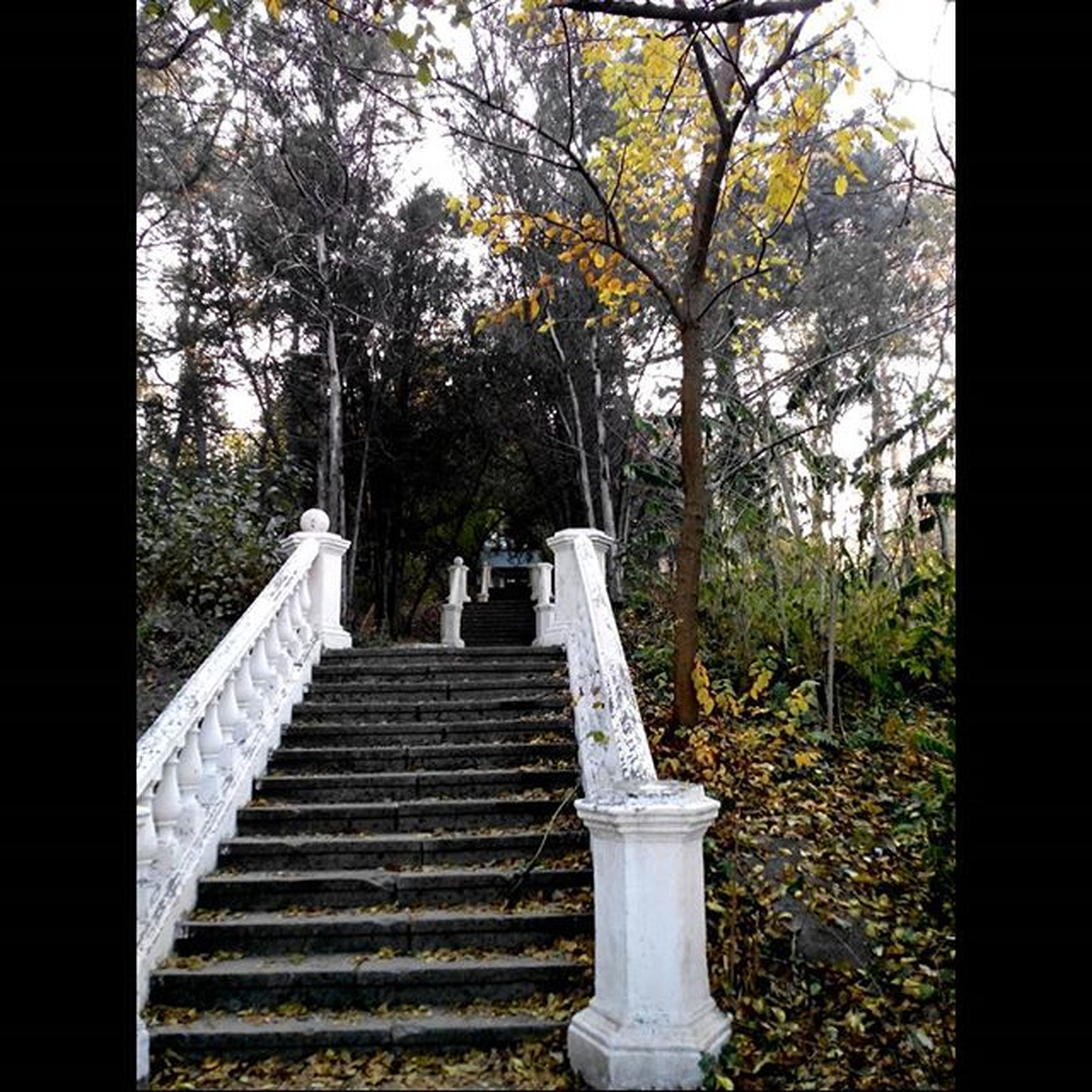 tree, built structure, steps, architecture, old, growth, building exterior, steps and staircases, staircase, day, railing, no people, auto post production filter, transfer print, stone material, tree trunk, forest, outdoors, branch, plant