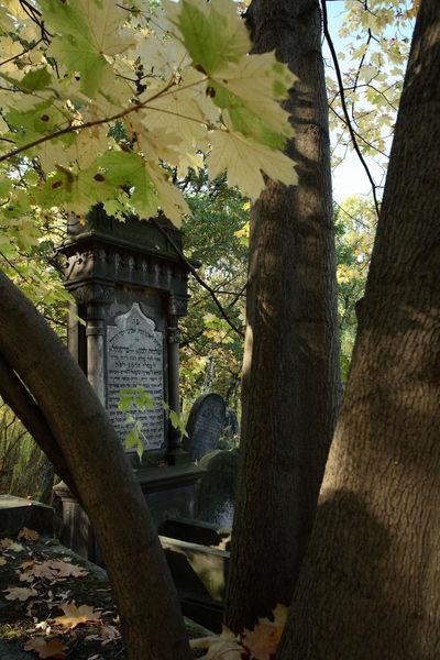 Autumn Cemetery Grave Jewish Tomb Gravestone Graveyard Jewish Cemetery Lodz Tombstone Tree Łódź