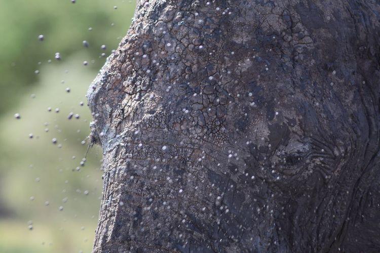 Close-up of muddy elephant