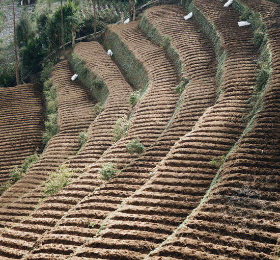 Pattern No People High Angle View Agriculture Landscape Rural Scene Scenics - Nature Day Nature Land Tranquil Scene Tranquility Field Environment Plant Growth Beauty In Nature Farm Outdoors Terraced Field Plantation Ancient Civilization Winemaking Farm Countryside