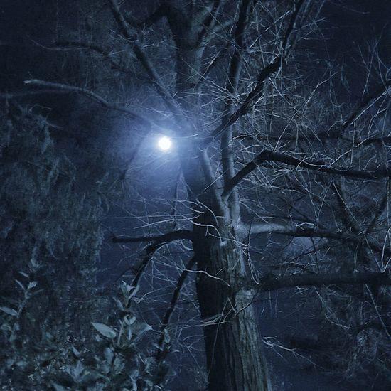 Night Sky Tree Nature Moon Moonlight Moon_collection