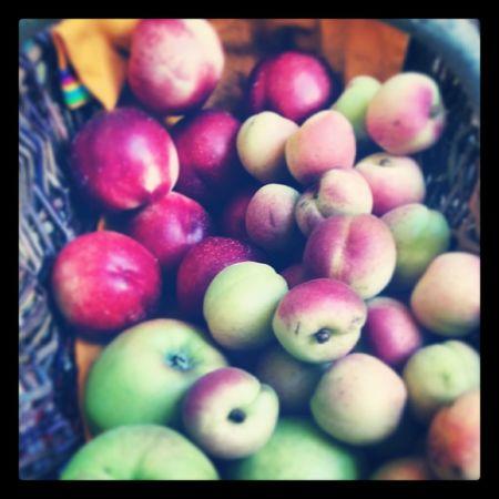 Fruits Fruits Früchte