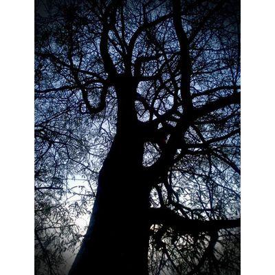 black&the darkness,,, Sonyxperiaid Xperianesia Sonyphotography Twilight instagallery_ina instanusantara instamagandroid