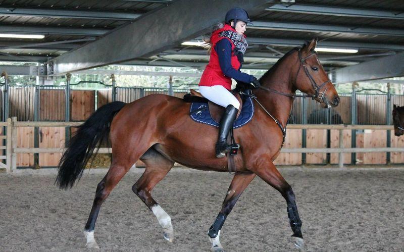 Regarde un cavalier sans son cheval, il lui manque la moitié de son sang. La Meilleure Mon Bebe Mon Bonheur ❤ La Plus Belle Concours Equestrian Horse