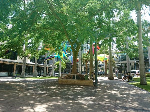 Building Exterior Day Festival Decor Hot Day Lunch Time Nature Outdoors Shades Summertime In Australia Surfers Paradise, Australia Tree Under The Trees
