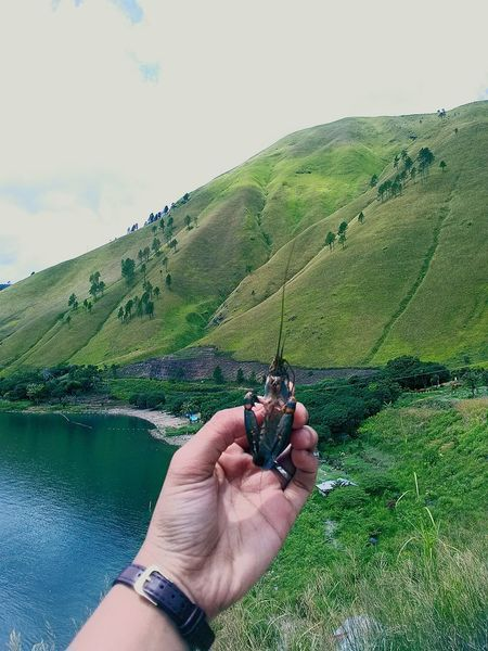 endemic of Lake Toba Endemic Human Hand Human Body Part Holding One Man Only People Nature Day