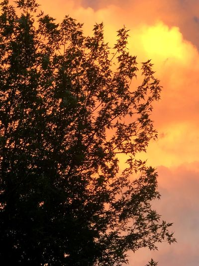 Post Storm Sky Post Storm Sky Sunset Plant Tree Beauty In Nature Nature Cloud - Sky Silhouette Orange Color Low Angle View Branch No People Scenics - Nature Tranquility Non-urban Scene Treetop Tranquil Scene