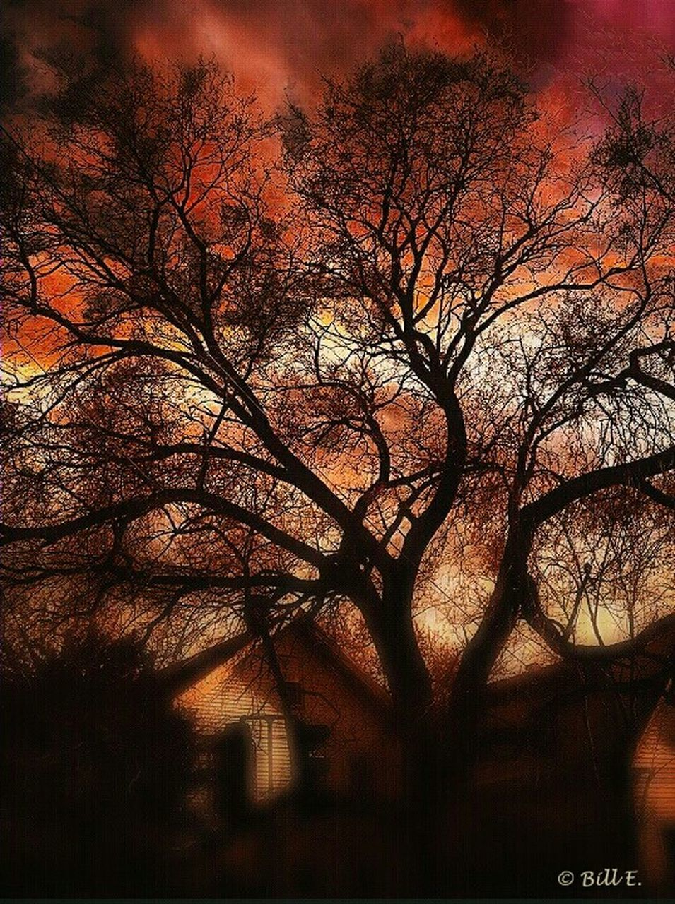 tree, bare tree, branch, no people, outdoors, nature, autumn, beauty in nature, sky, day