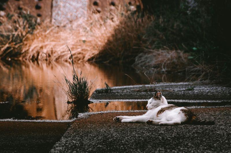 Cat relaxing at lakeshore