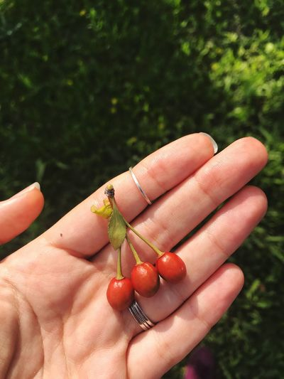 Little cherries