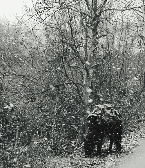 Tree One Person Real People Nature Winter Snow Cold Temperature Bare Tree Outdoors Men Day Beauty In Nature Snowing Sky Mammal People One Man Only Horse 3XSPUnity Bulgariannature Mobilephotography Nature Blackandwhite Photography