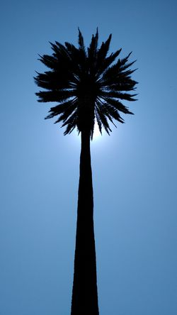 Palm Tree Palm Tree Silhouette Blue Sky