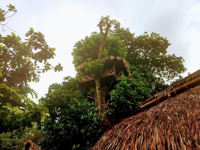Treehouse Treehouses Tayrona Tayrona Natural Park Tayrona, Colombia Tayronanationalpark