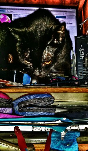 Somethong one should NEVER do let a cat on to ebay Black Cat Photography Black Cat Head Shot Special Effects Life Is A Journey Enjoy The Little Things Adopt To Save A Life Save A Life Adopt Illuminated Multi Colored No People Cat On Ebay Dont Let Your Cat Bid On Ebay