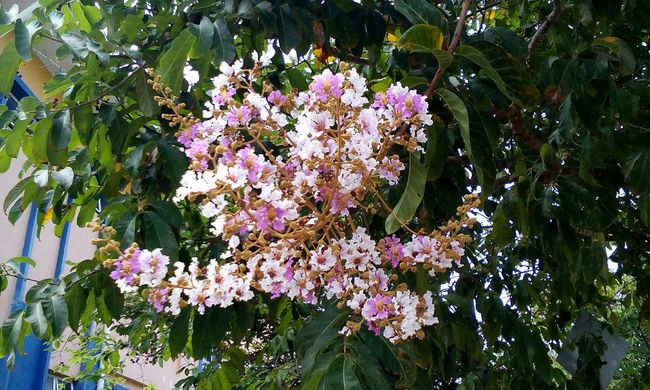 Spring Into Spring Flower White And Pink Beautiful Nature UniklMIMET