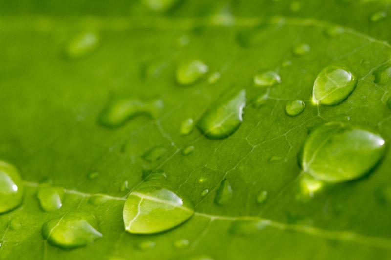 Leaf Drop Wet