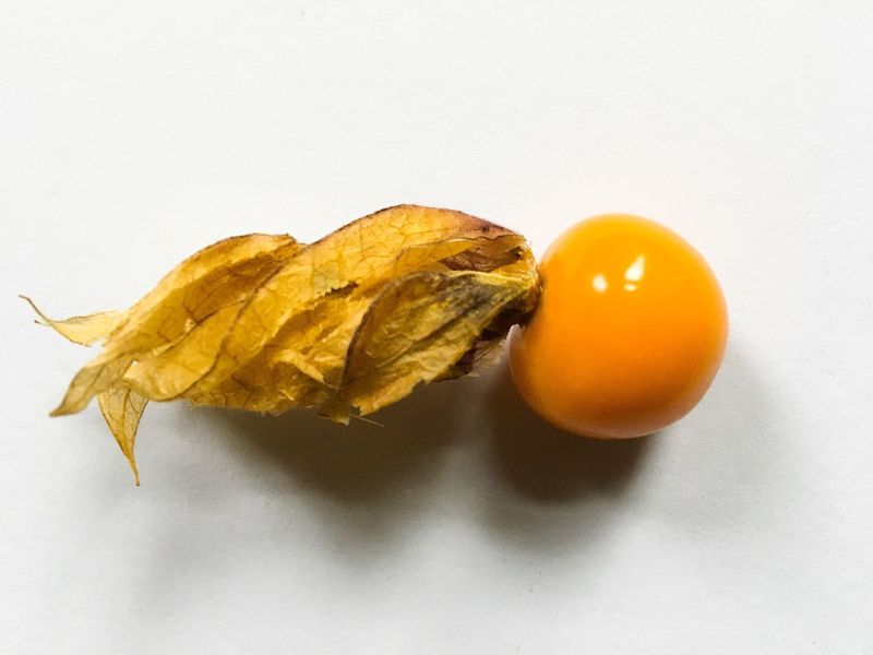 One Physalis Food Studio Shot White Background Food And Drink Healthy Eating Freshness Close-up Yellow No People Day Physalis Physalis Fruit Gooseberry Cape Gooseberry Close Up