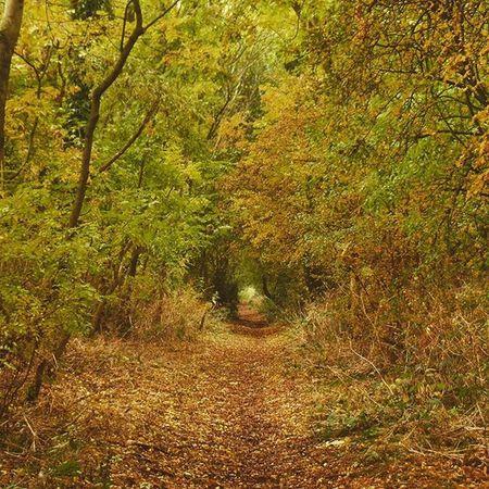 Britishcountryside Essington Autumn Wolverhampton