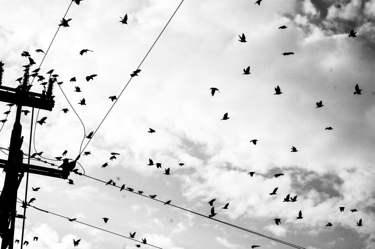 //race Nikonphotography Nikon Poland Bird Birds Bird Photography Blackandwhite Whire Sky Clouds And Sky TakeoverContrast MonochromePhotography
