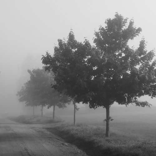 Bw_trees Tree_collection  Foggy Morning MADE IN SWEDEN Bw_collection Blackandwhite