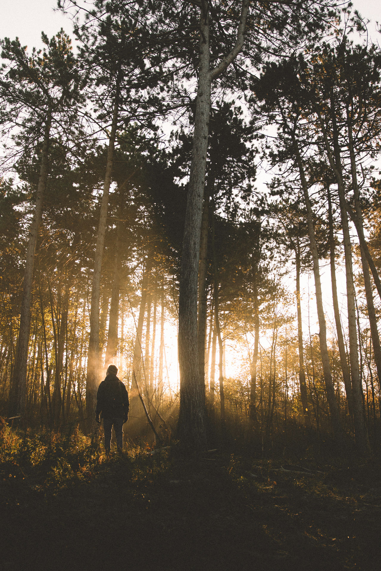 Rear view of man standing by trees in forest during sunset