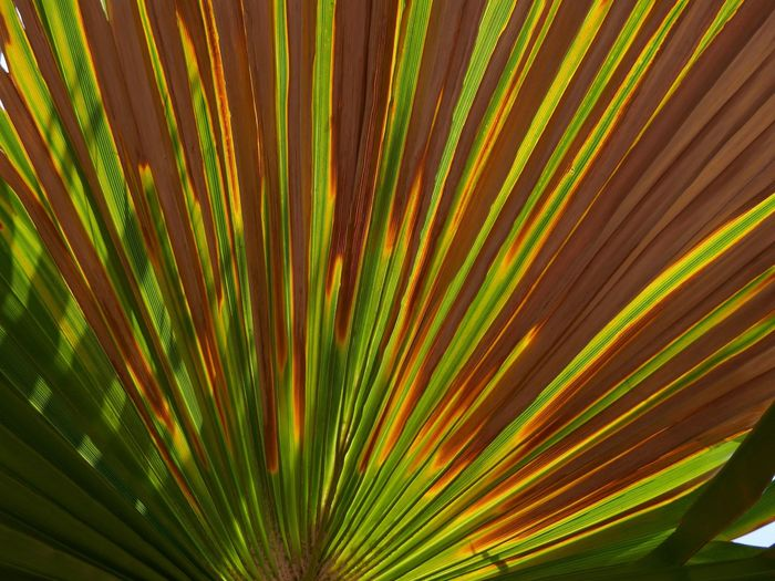 Growth Plant Leaf Palm Leaf Palm Tree No People Plant Part Beauty In Nature Tropical Climate Nature Tree Green Color Close-up Sunlight Natural Pattern Pattern Outdoors Day Freshness