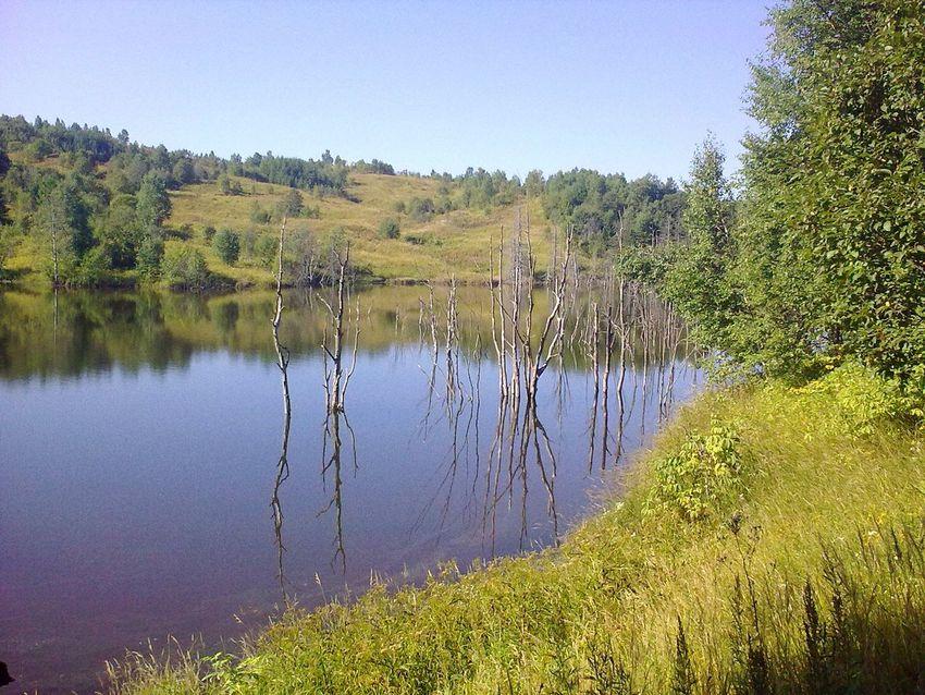 Treemirror Sakhalin Nature Mirrors Sakhalin-island красотарядом Beautiful Nature Russian Nature Lakeview Russia россия озера природароссии