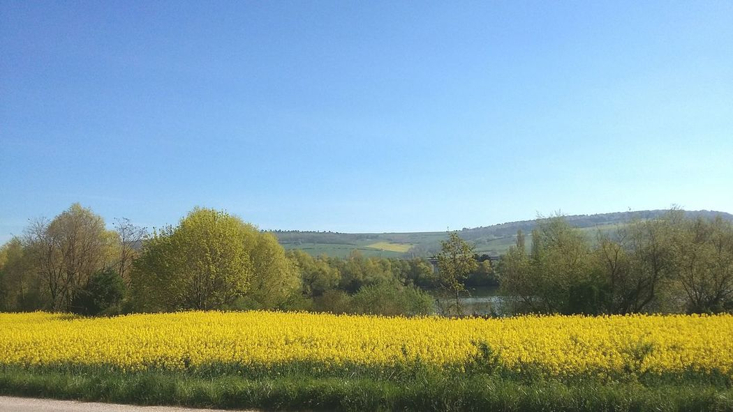 Lorraine Meurthe Et Moselle No Filter Fields EyeEm Nature Lover EyeEm Best Shots Sun_collection Blue Sky Beautiful Day This Is Where I Live...