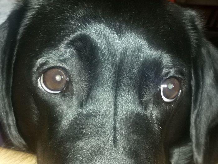 Dog Animal Eye Portrait Codzienne Spojrzenia najbardziej wierny pies One Animal Zawsze Kochające Spojrzenie kocham mojego psa