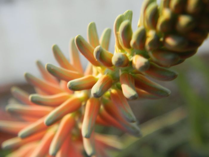 Close-up of flower buds growing outdoors