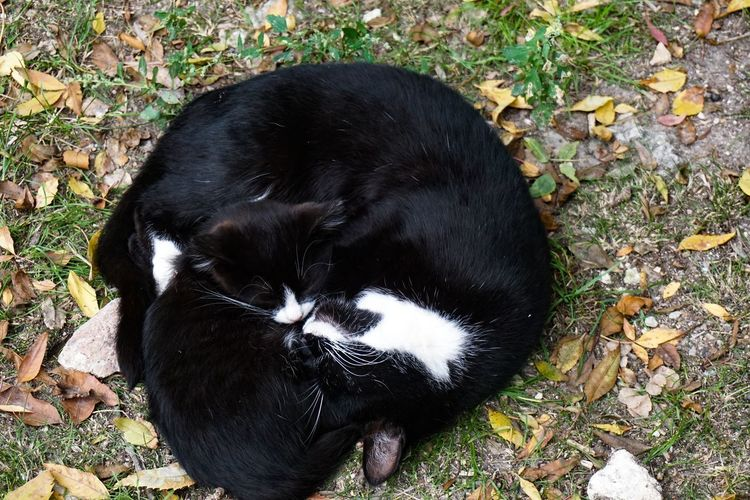 High angle view of black cat on field