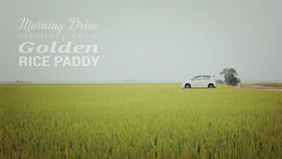 Morning drive along the Rice Paddy The Traveler - 2015 EyeEm Awards