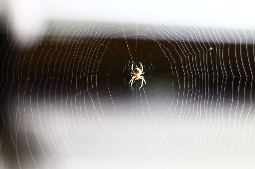Spider Spiderweb Capture The Moment