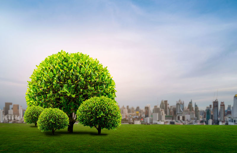 Tree on green grass city background Tranquility Sky Green Leaf Day Grass Leftbehind Fresh Forest Garden Ecology Agiculture Environment Conceptual Tree City Plant Landscape Outdoors Nature Growth