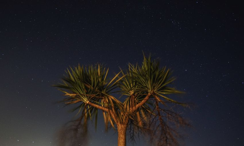 Palm Trees and the Galaxy Starry Sky Starrynight Star Constellations Starry Skies Starscape Constellations Growth Tree Palm-tree Lone Tree Starry Astrophotography Night No People Arts Culture And Entertainment Space Star - Space Sky Outdoors Galaxy