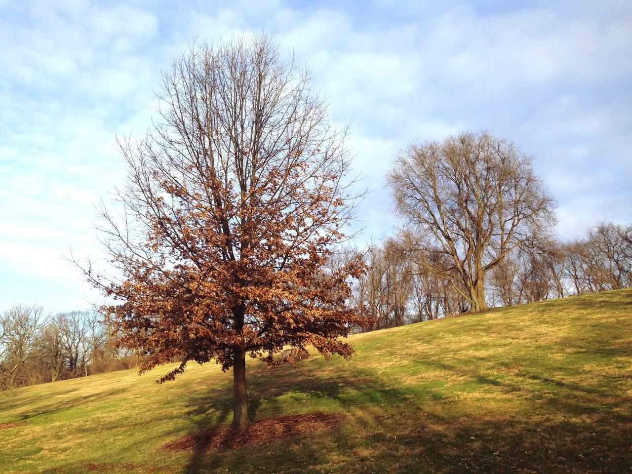 Trees On Grassy Field During Autumn