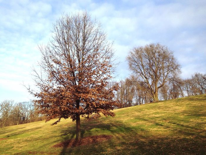 Open Edit Pittsburgh Park Trees Walking Around Outdoors Light And Shadow