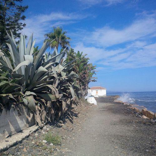 super große Agaven Agave Benahavis SPAIN Beach Nature Photography Andalucía