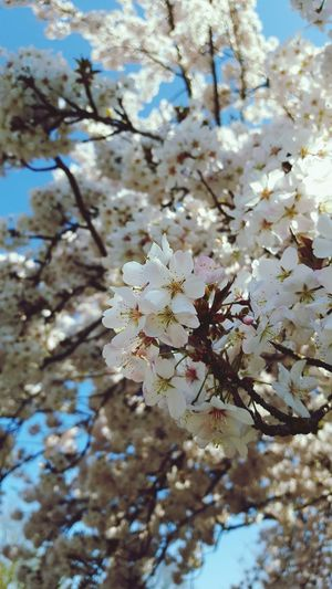 😁✌ Flower Fragility Blossom Nature Tree Springtime Beauty In Nature Branch No People Growth Petal Close-up Day Flower Head Low Angle View Sky Outdoors Animals In The Wild Freshness Animal Themes