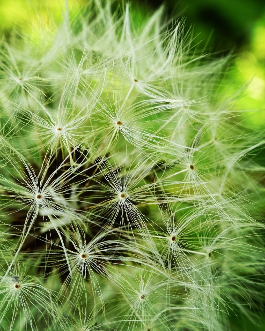 dandelion, flower, fragility, nature, dandelion seed, freshness, beauty in nature, growth, softness, close-up, botany, wildflower, flower head, outdoors, no people, uncultivated, seed, plant, focus on foreground, green color, day