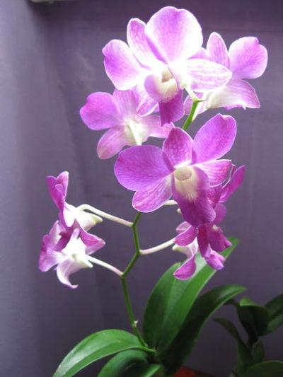 Blooming Botany