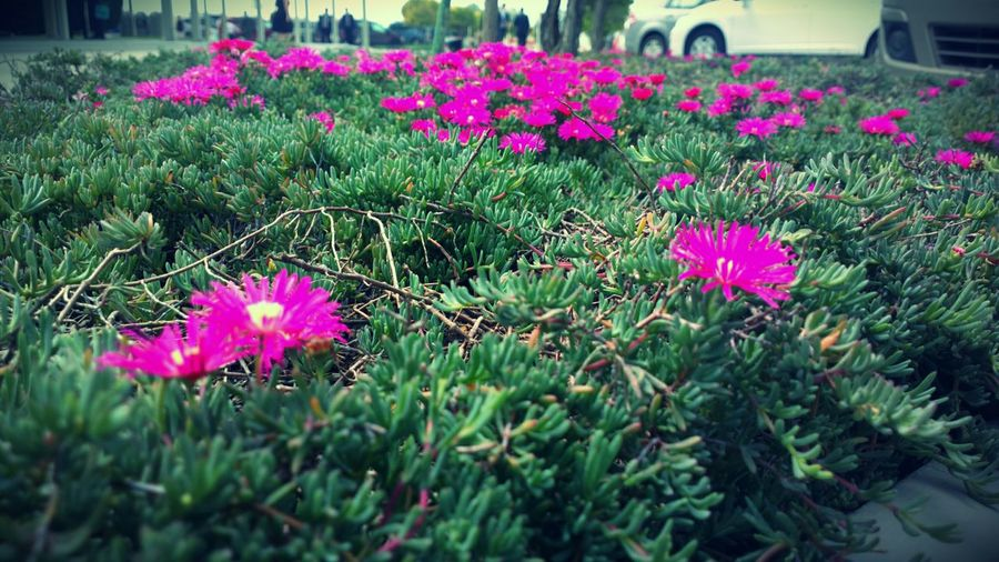 Flower Nature Close-up Outdoors Plant No People Grass Purple Creation First Eyeem Photo