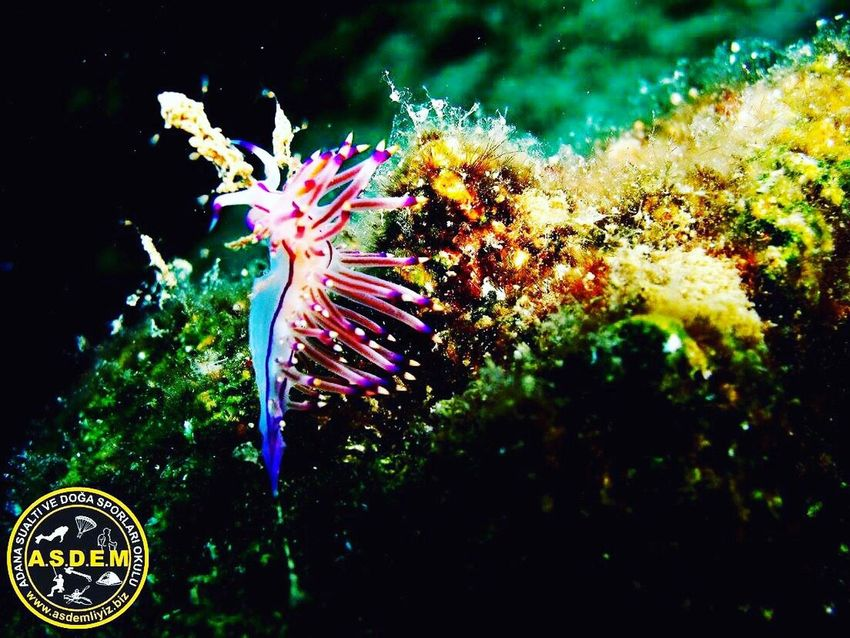 ASDEM DÎVE CENTER- büyükeceli 2016 Padi Dive Center PADI Divers Dive Scuba Diving Scubalife Underwater Photography Motion Multi Colored Celebration No People Outdoors Night Illuminated Close-up