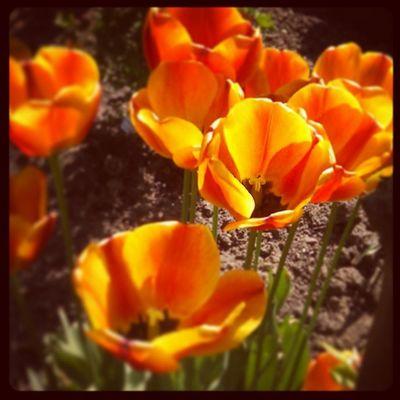 Frühling! <3