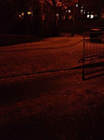Frozen Frost Snow Night