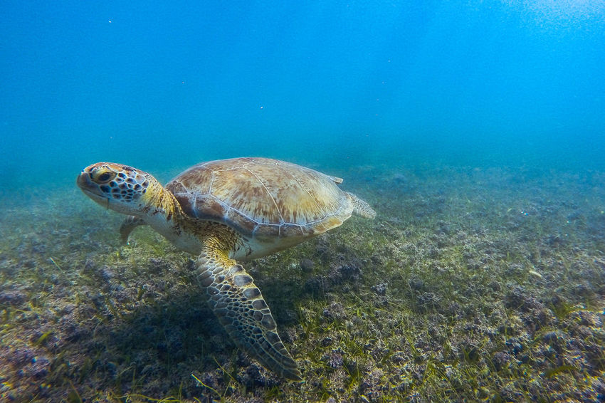 Beauty In Nature Blue Close-up Day Feel The Journey Natural Pattern Nature No People Original Experiences Outdoors Scenics Sea Life Sky Tranquil Scene Tranquility Turtle UnderSea