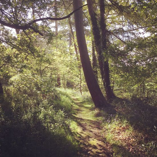 Tree Nature Forest Day No People Outdoors Tranquil Scene Grass Tranquility Sunlight Scenics Growth Beauty In Nature Landscape